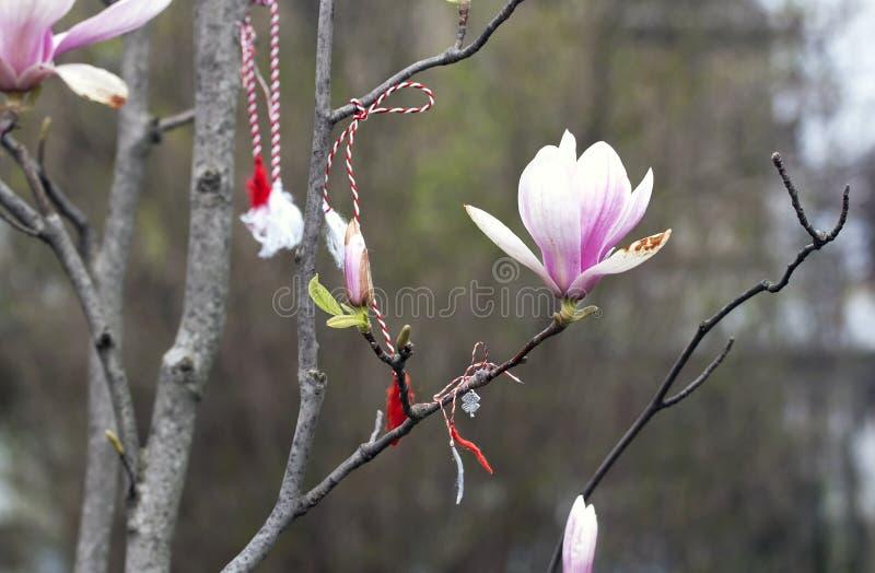 Magnolia and spring symbols - RAW format stock photo