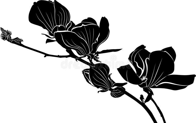 Magnolia Una rama de una magnolia floreciente stock de ilustración