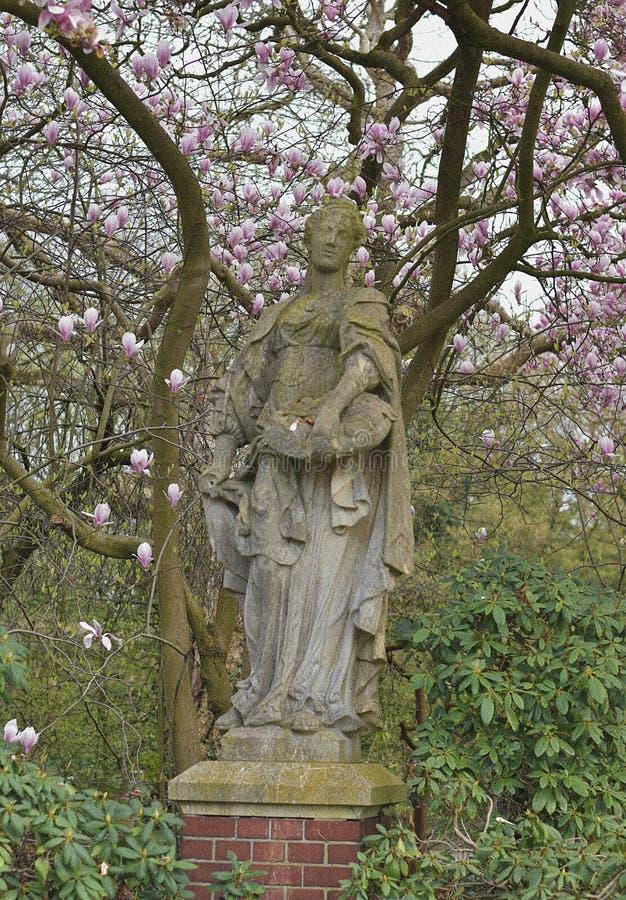 Magnolia w swój naturalnym pięknie zdjęcie royalty free