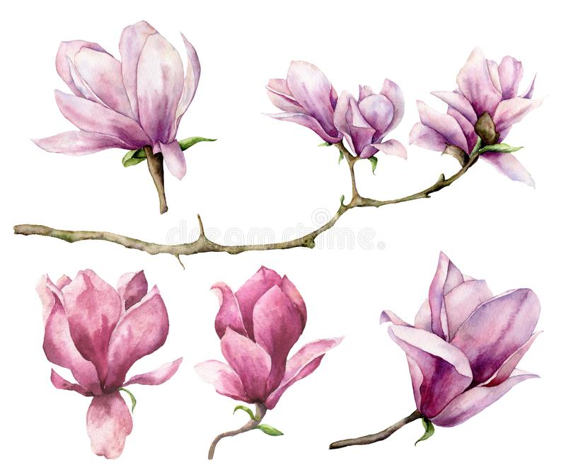 Magnolia Watercolor και σύνολο κλάδων Το χέρι χρωμάτισε τα λουλούδια που απομονώθηκαν στο άσπρο υπόβαθρο Floral κομψή απεικόνιση  διανυσματική απεικόνιση