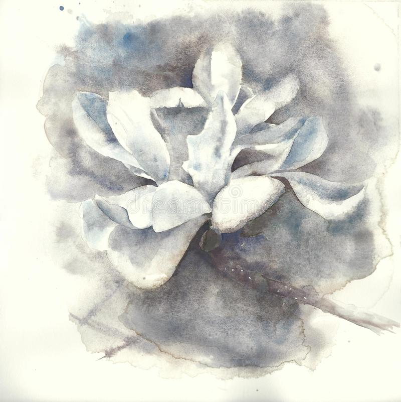Magnolia flower watercolor painting illustration greeting card royalty free stock images