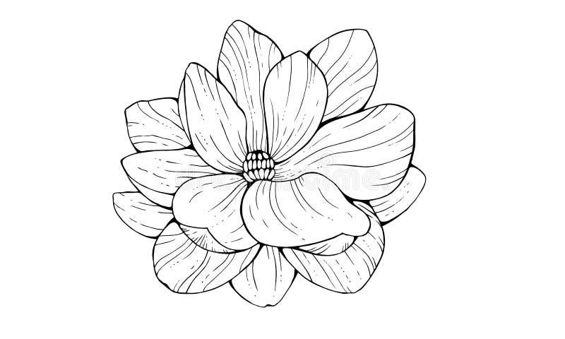 Magnoliabloem in contourstijl op witte achtergrond wordt geïsoleerd die royalty-vrije illustratie