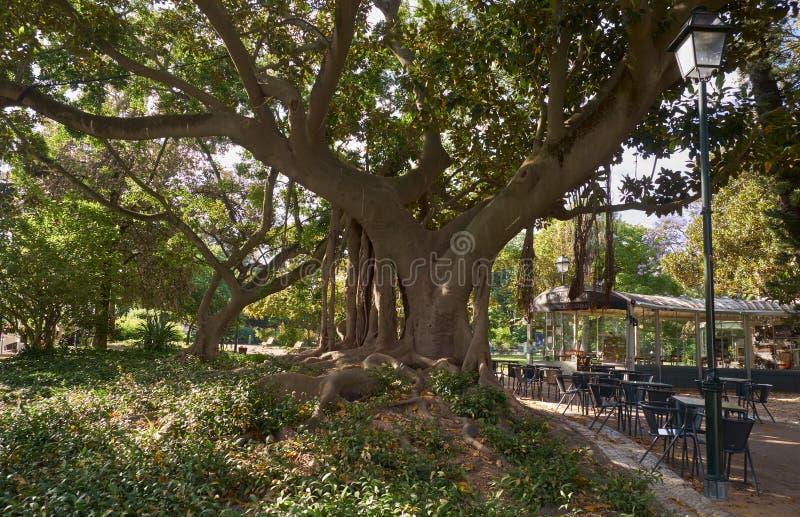 Magnoliaboom in de Echte tuin van Principe lissabon portugal royalty-vrije stock fotografie