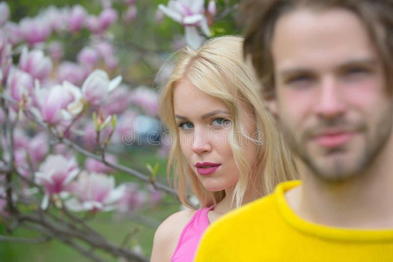 Magnolian paret som ?r f?r?lskat i v?rblomma, blomstrar royaltyfria foton