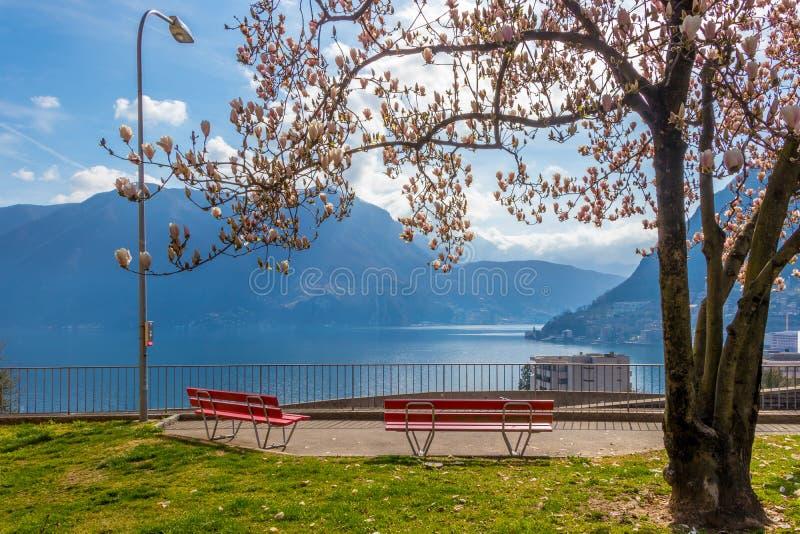 Magnoliaträdet och de röda bänkarna på kullen i Lugano royaltyfri fotografi