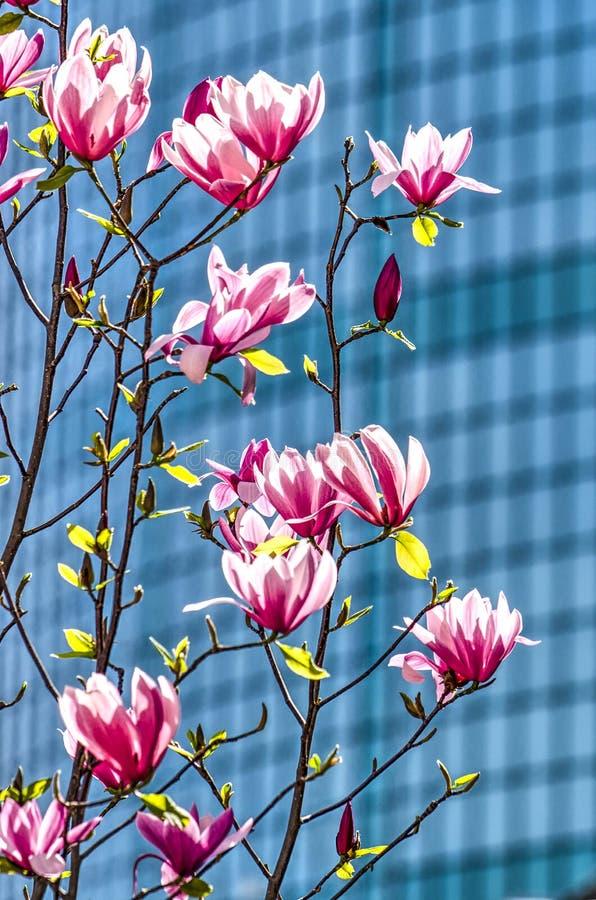 Magnolie und das WTC lizenzfreies stockfoto