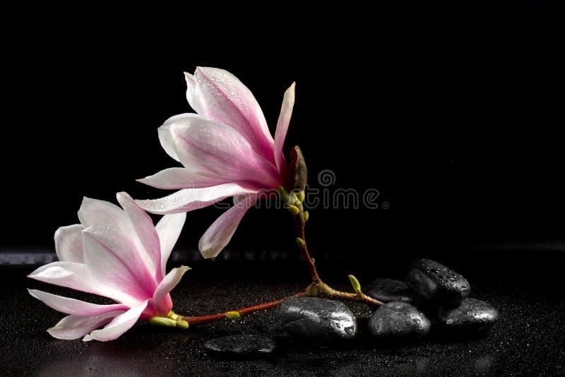 Magnolien-Blumen und Zensteine stockfotos