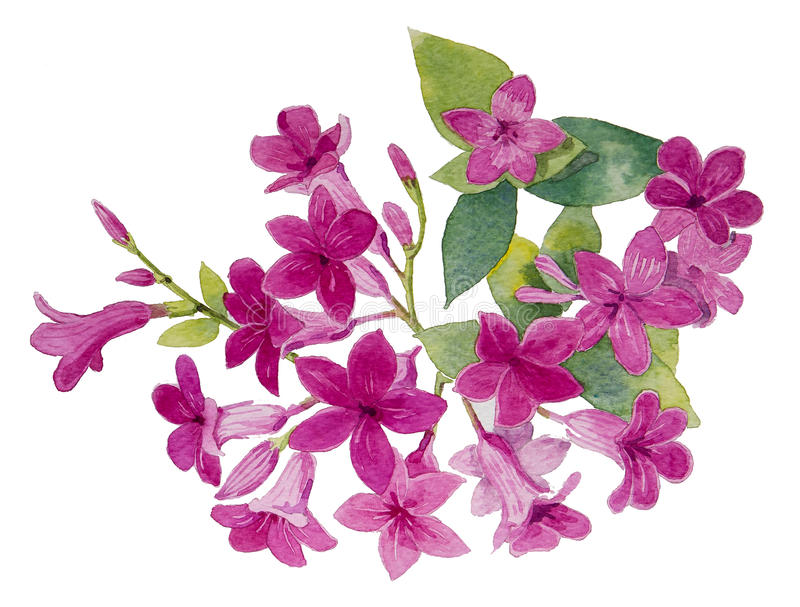 Magnoliopsida illustration de vecteur