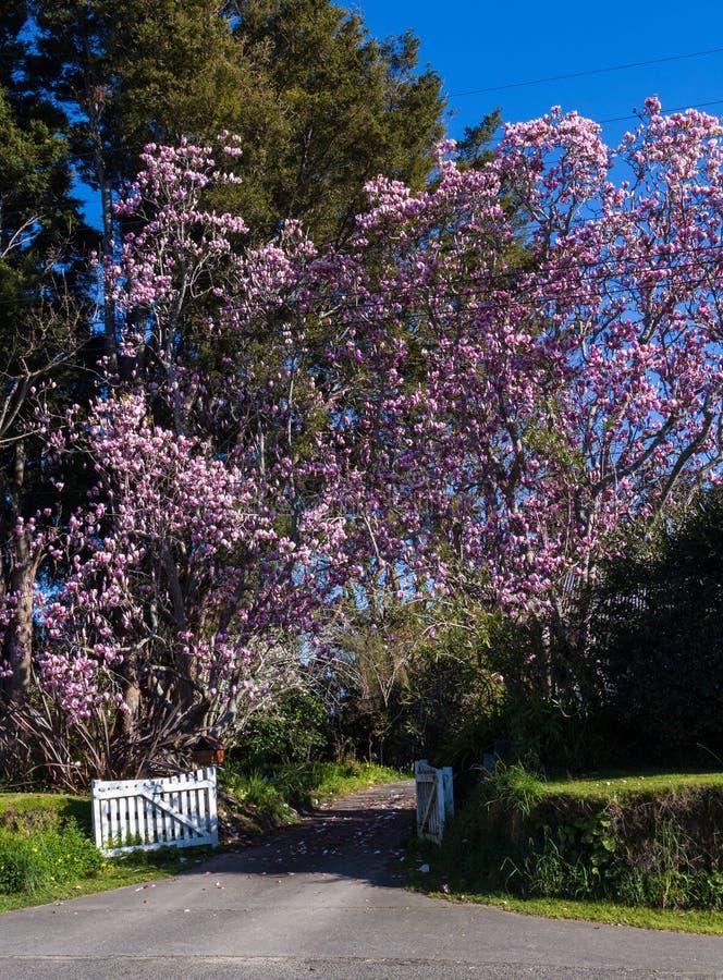 Magnoliowa brama fotografia stock