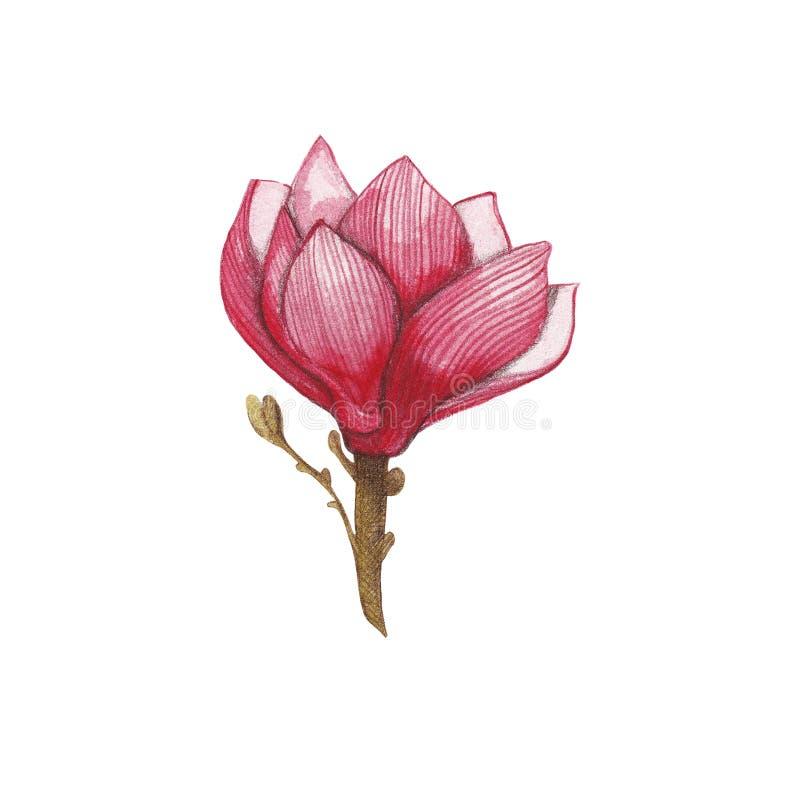 Magnoliowa kwiat ilustracja Ręka remisu ilustracja obraz stock