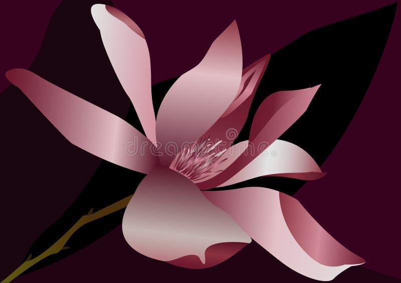 Magnoliowy kwiat zdjęcie royalty free