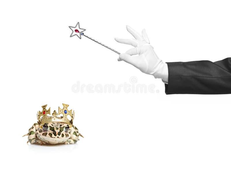 Mago que sostiene una varita mágica y una rana imágenes de archivo libres de regalías