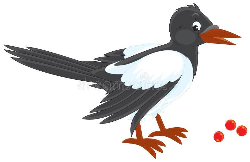Magpie ilustração do vetor
