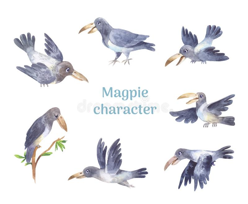 Magpie character, set of poses of grey cute bird stock image