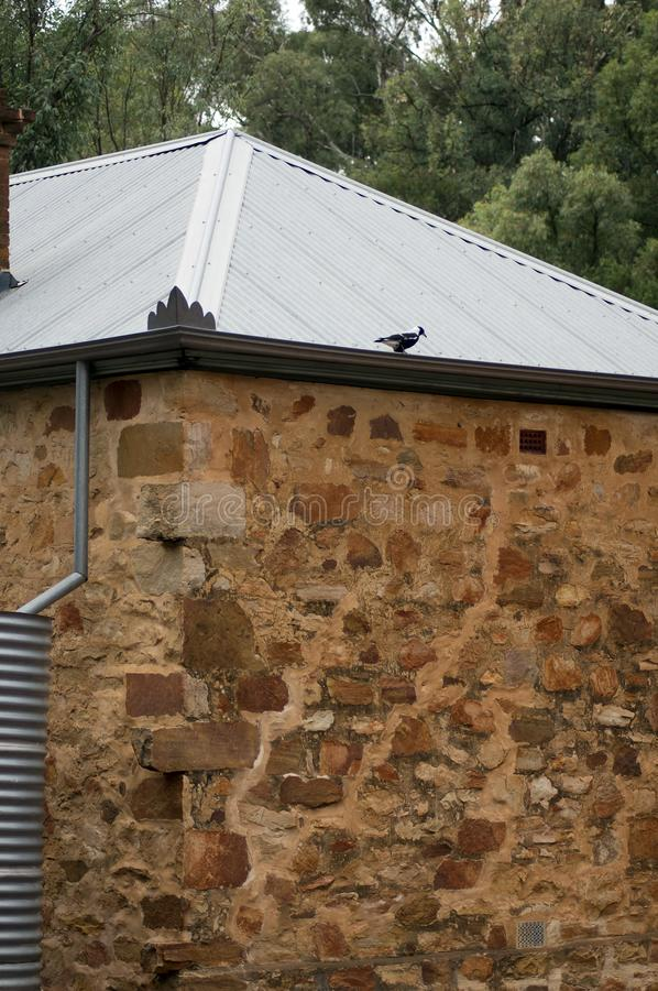 Homestead external wall, Wilpena Pound, South Australia. Magpie of corrugated iron roof of homestead inside Wilpena Pound, South Australia, Australia royalty free stock image