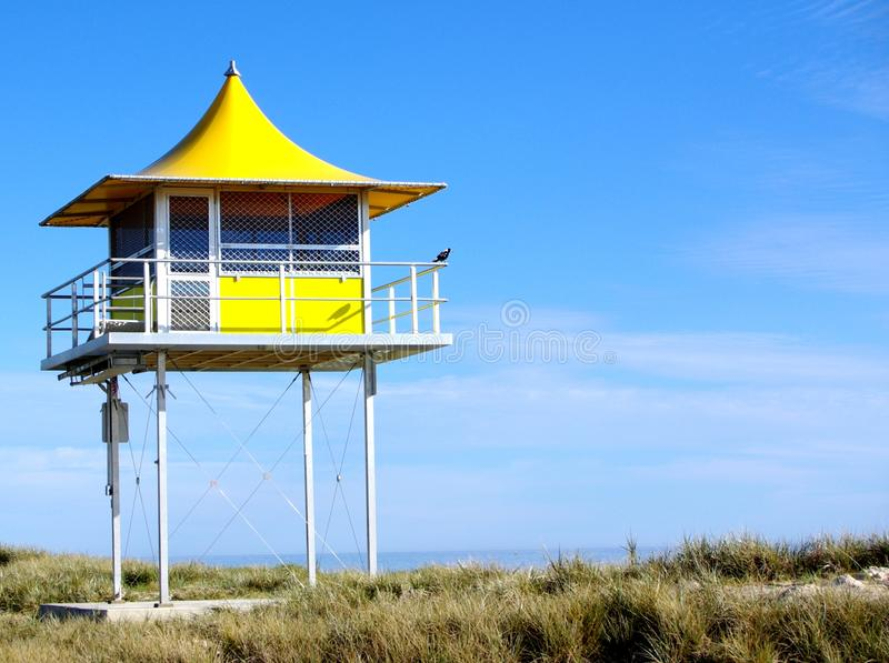 Download Magpie Lifeguard stock image. Image of lifesaver, adelaide - 20717835