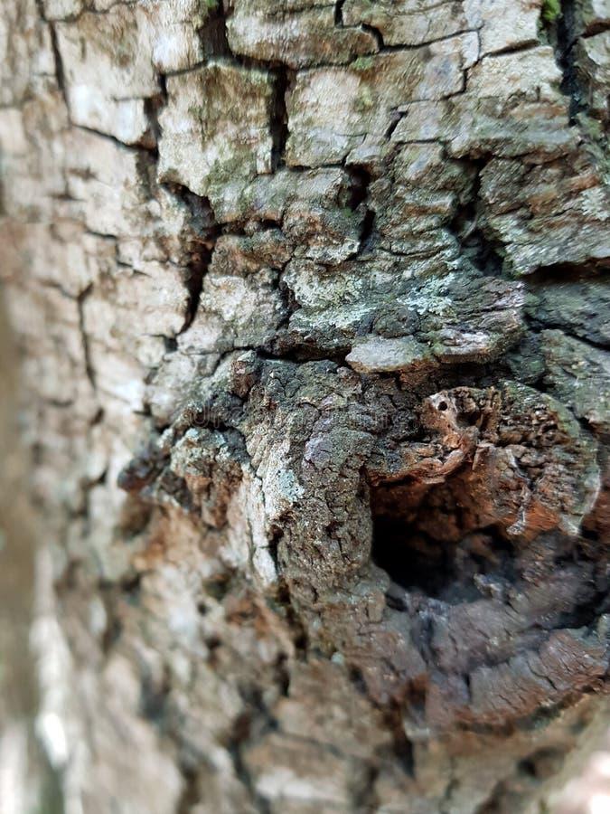 Magro stänger sig upp sikt av en trädstam royaltyfri foto