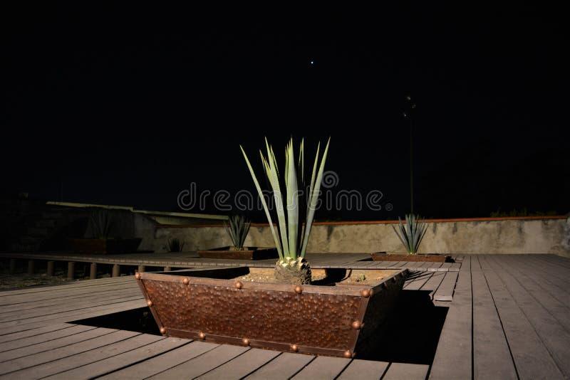 Maguey ` s garden5 fotografia royalty free