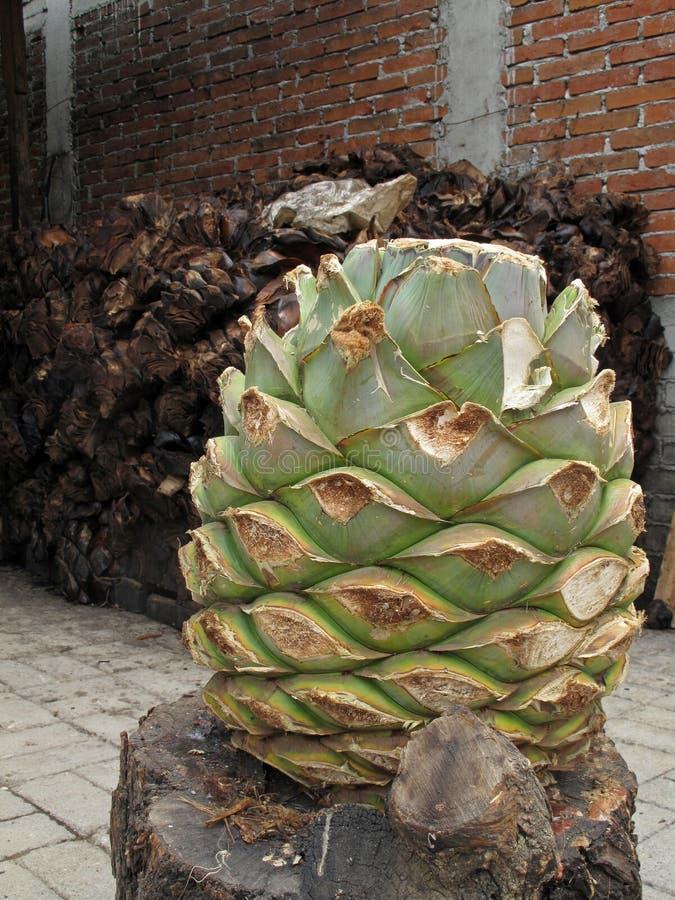 Magueyinstallatie om mezcal, Mexico te produceren royalty-vrije stock foto