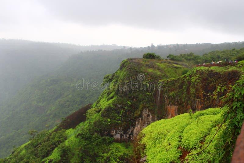 Mahabaleshwar wzrosty obraz royalty free