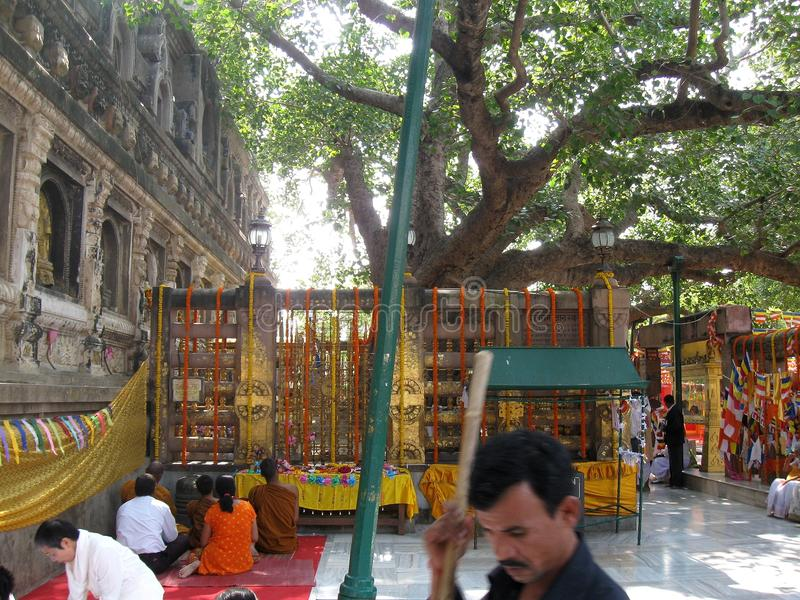 Download People Meditating Beneath Bodhi Tree - Great Buddha Mahabodhi Mahavihara Temple BodhGaya India Editorial Stock Image - Image of awakened, famous: 103681889