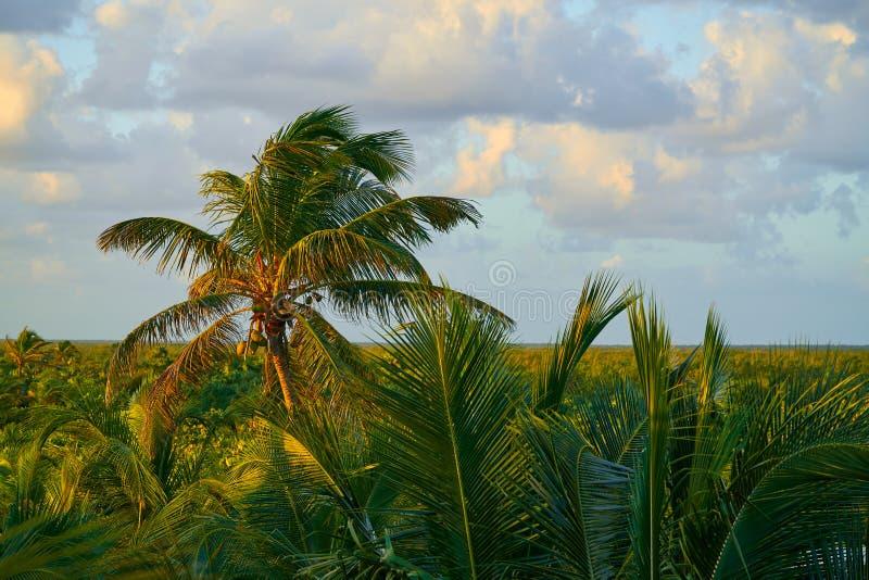 Mahahual Caribbean Palm Trees Jungle Stock Image - Image ...
