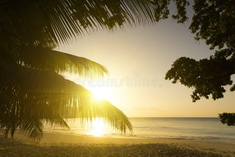 Mahe海岛,塞舌尔群岛。日落海滩。棕榈。 免版税库存照片