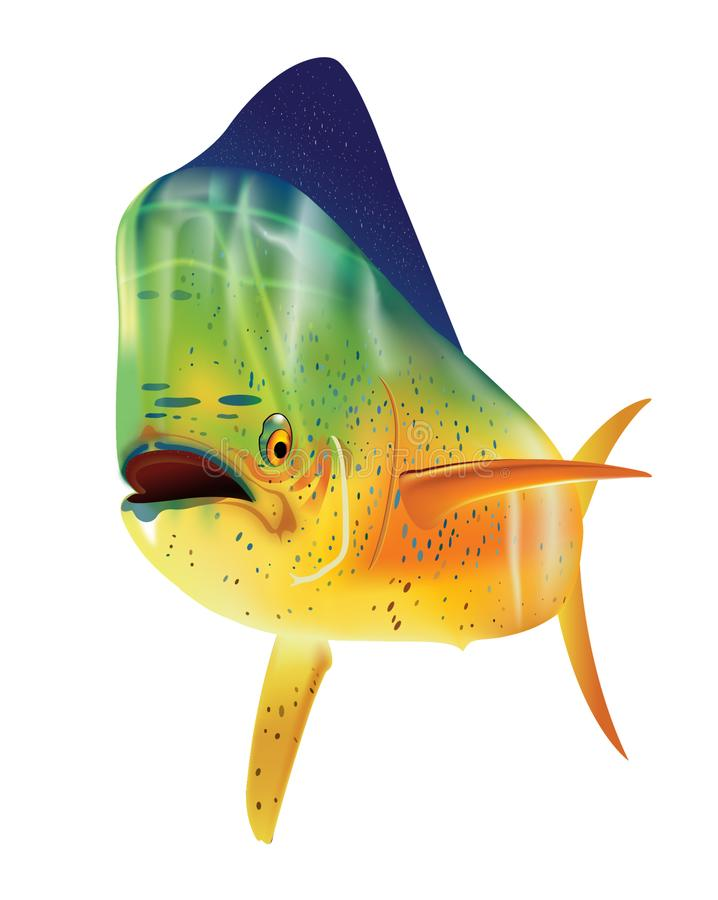 Mahi Mahi delfinfisk royaltyfri illustrationer