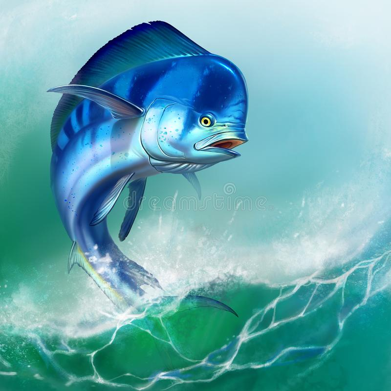 Mahi mahi or dolphin fish on white. Mahi mahi blue fish royalty free illustration