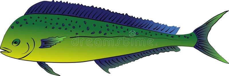 Mahi mahi或海豚鱼 皇族释放例证