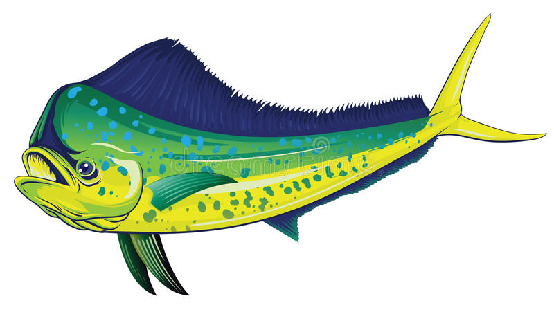 Mahi Mahi vektor illustrationer