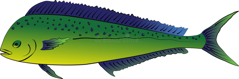 Mahi Mahi or Dolphin fish royalty free illustration
