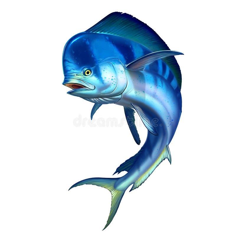 Mahi mahi or dolphin fish on white. royalty free illustration