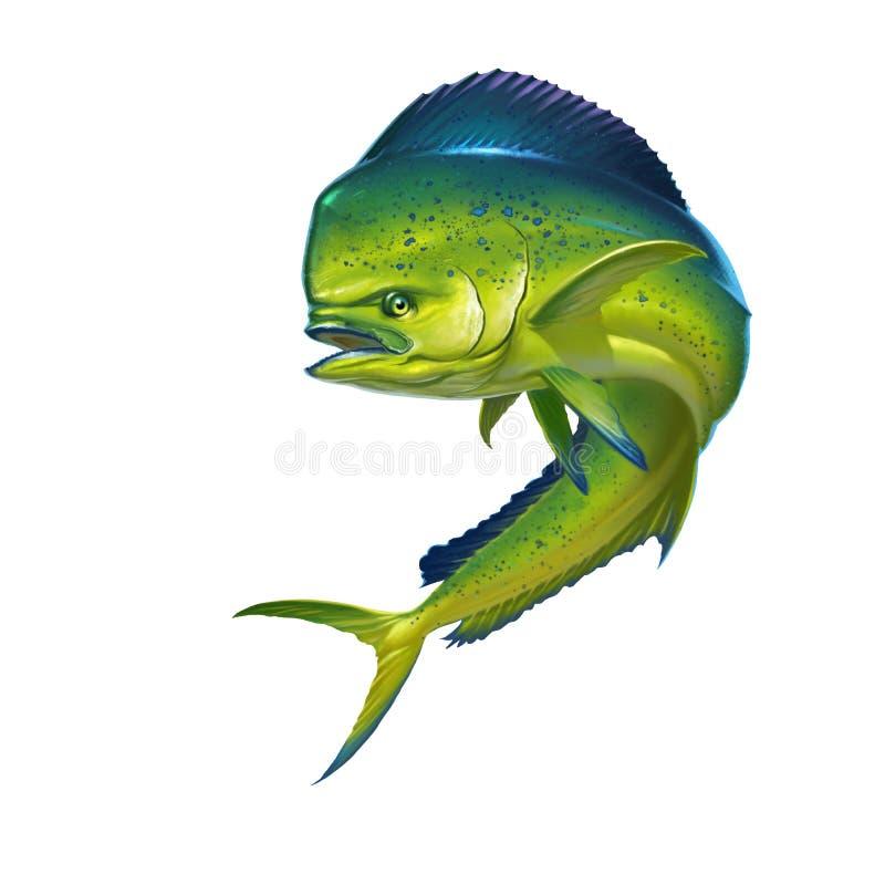 Mahi mahi fish. Mahi mahi or dolphin fish on white