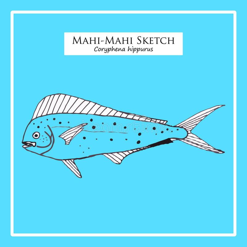 Mahi-Mahi sketch. Hand-drawn Mahi-Mahi sketch on blue background stock illustration