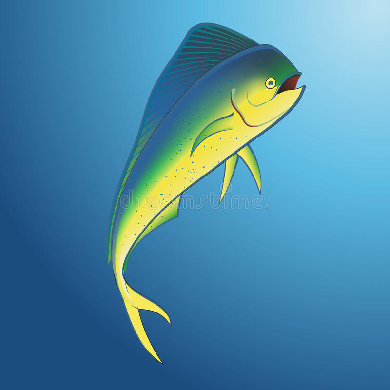 Mahi Mahi Underwater royalty free illustration