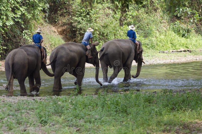 Mahoots e elefantes fotos de stock