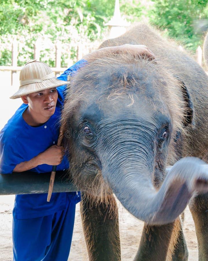 Mahout和他的大象在Samphran大象在佛统研了&动物园2014年5月24日 库存照片