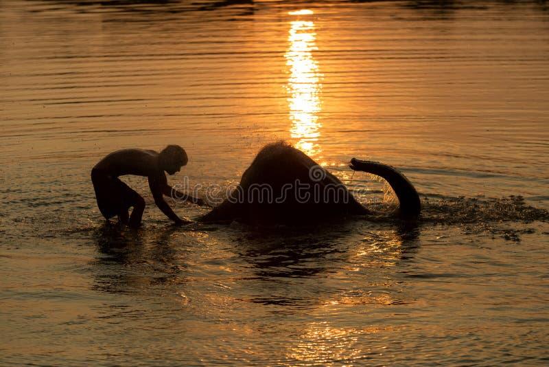 Mahout e elefante que banham-se na associação foto de stock royalty free