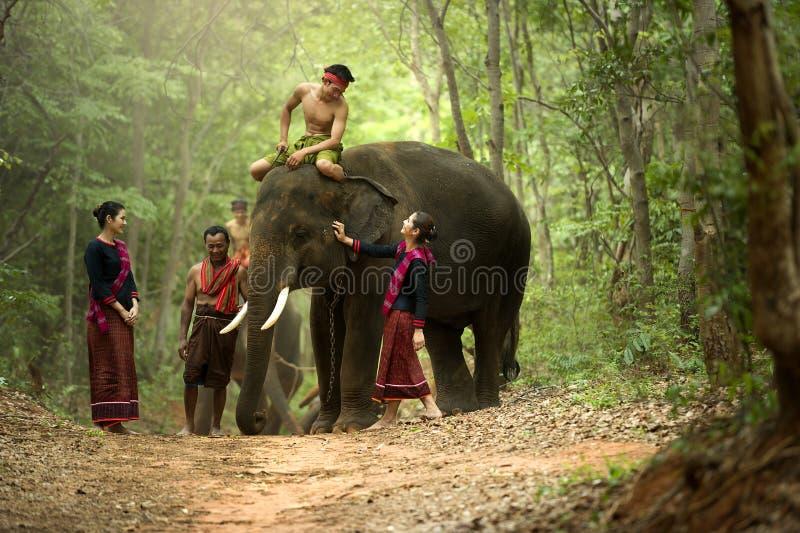 Mahout en de olifant bij surin, Thailand stock afbeelding