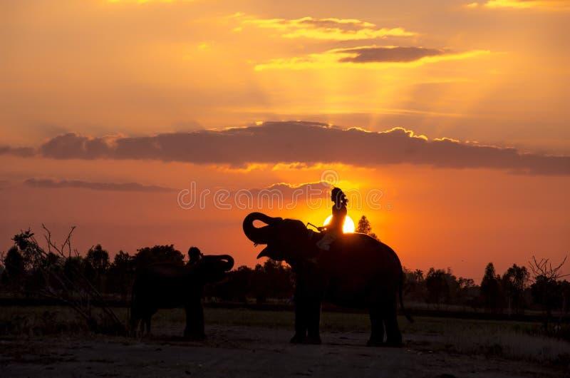 Mahout en olifant royalty-vrije stock foto's