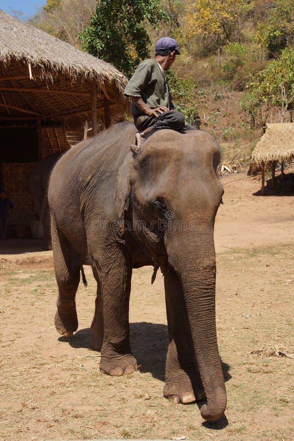 Mahout jedzie jego słonia zdjęcie royalty free