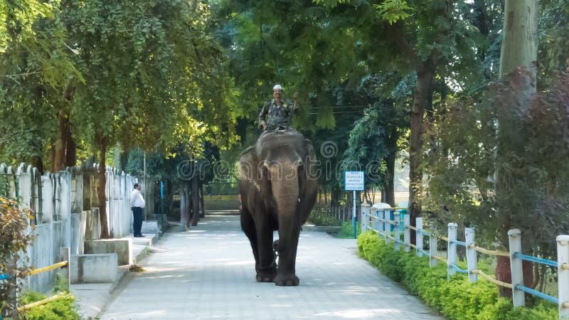 Mahout/Mahawat οδηγώντας το θηλυκό ελέφαντα στο ζωολογικό κήπο Indore, Ινδία στοκ φωτογραφία με δικαίωμα ελεύθερης χρήσης