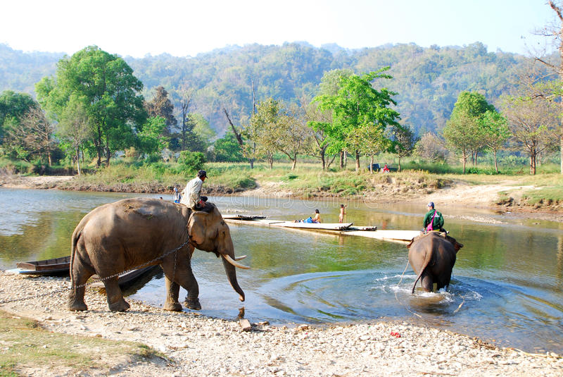 Download Mahout och elefant redaktionell foto. Bild av park, nationellt - 37348715