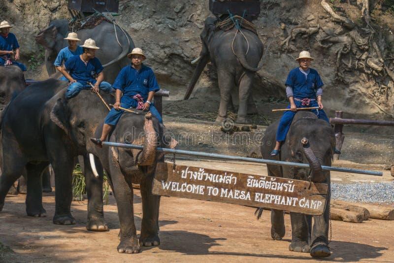 Maesa Elephant Camp, Chiang Mai, Thailand royalty free stock images
