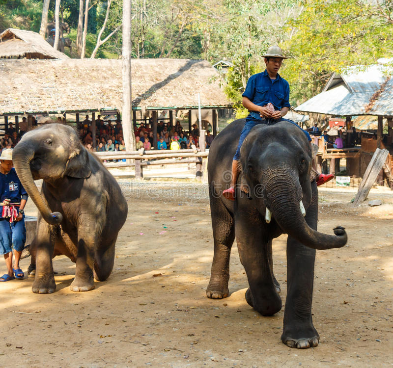 Mahout ride elephant and elephant is dancing stock photo