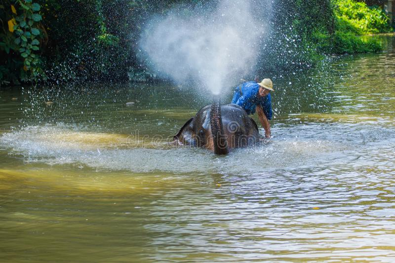 Mahout training elephant in elephant camp. Lampang, Thailand - November 3, 2012: Mahout training elephant to show to tourists in elephant camp in national park royalty free stock image