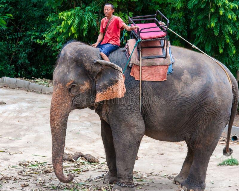 Mahout und sein Elefant, die warten, um die Ausflüge mit Touristen zu beginnen stockbild