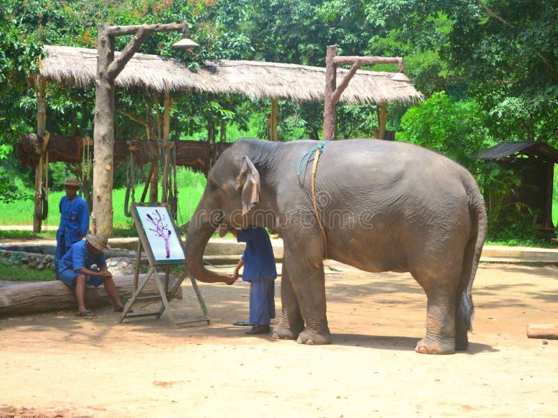 Mahout W przedstawieniach I słoń obraz royalty free