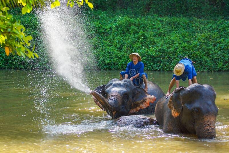 Mahouts que entrenan a elefantes en campo del elefante imagenes de archivo